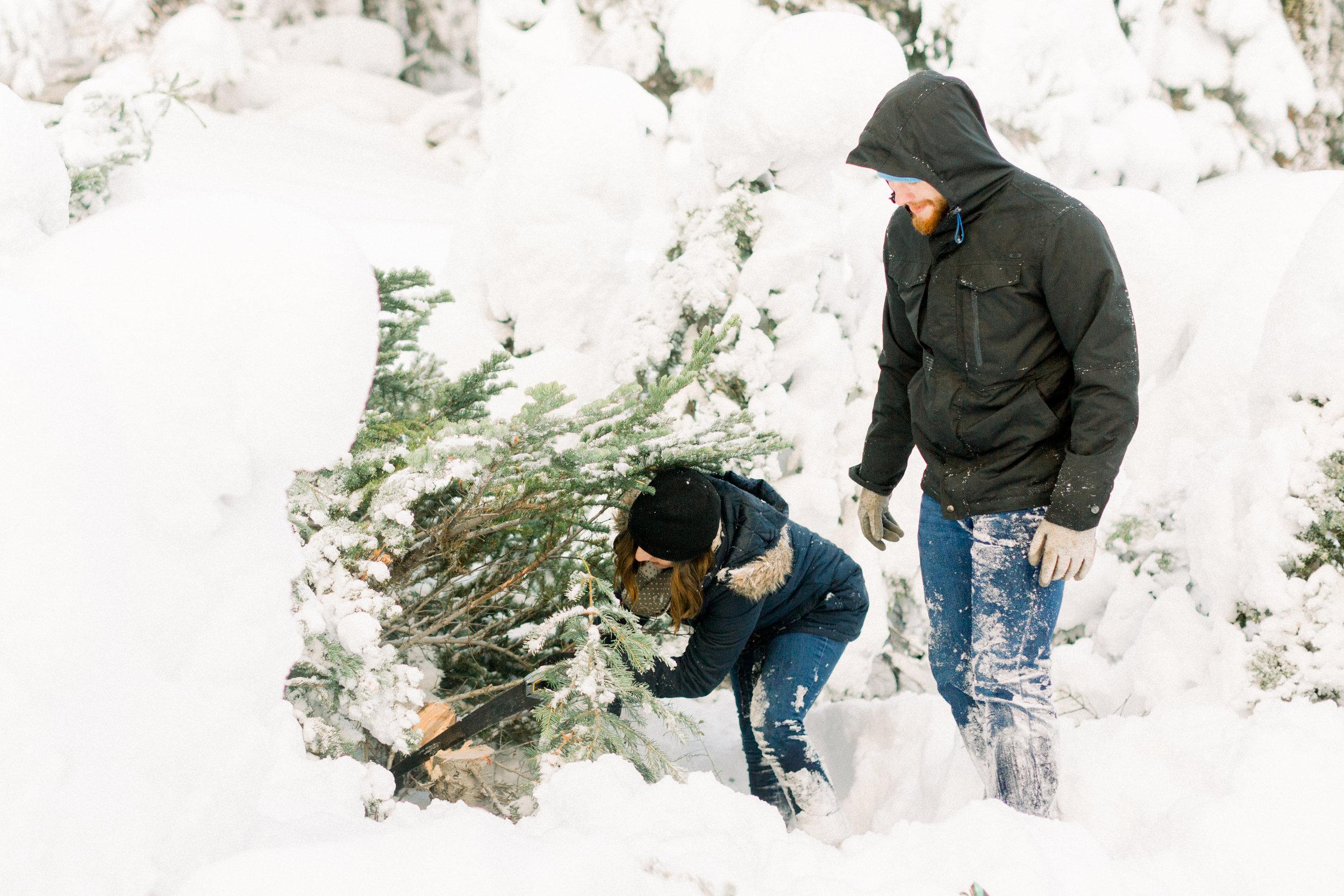 1Butte-Meadows-Christmas-Tree-Adventure (1 of).jpg