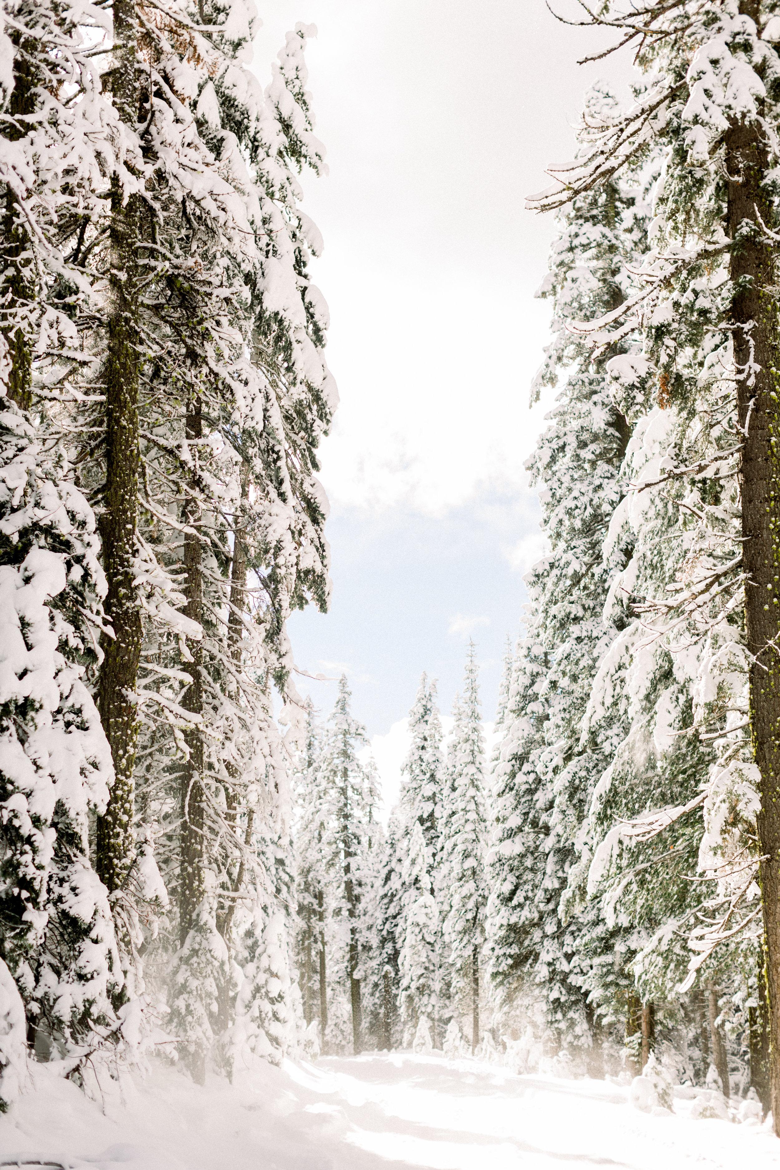 129Butte-Meadows-Christmas-Tree-Adventure (116 of).jpg