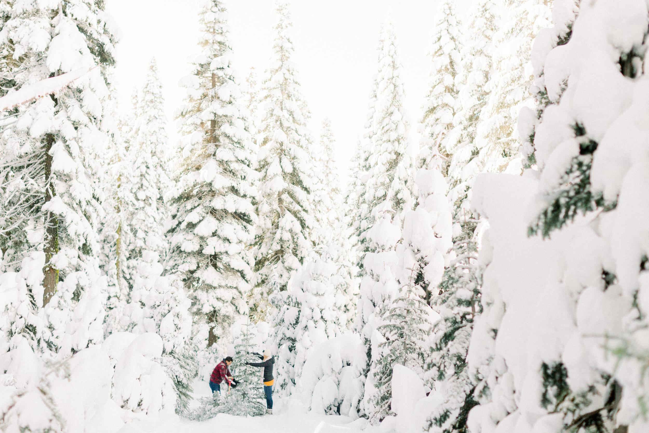 1Butte-Meadows-Christmas-Tree-Adventure (1 of)-2.jpg