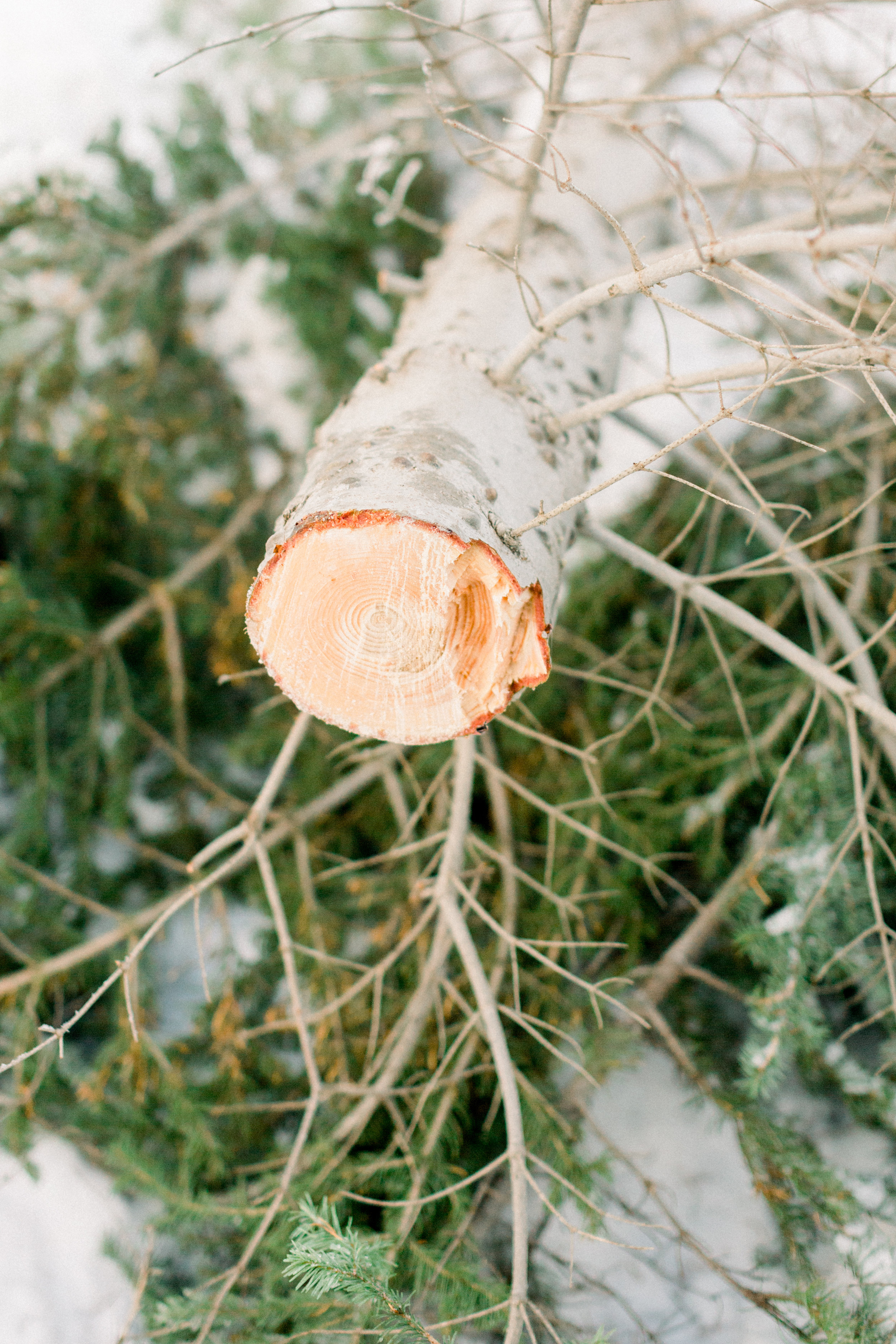 129Butte-Meadows-Christmas-Tree-Adventure (35 of).jpg