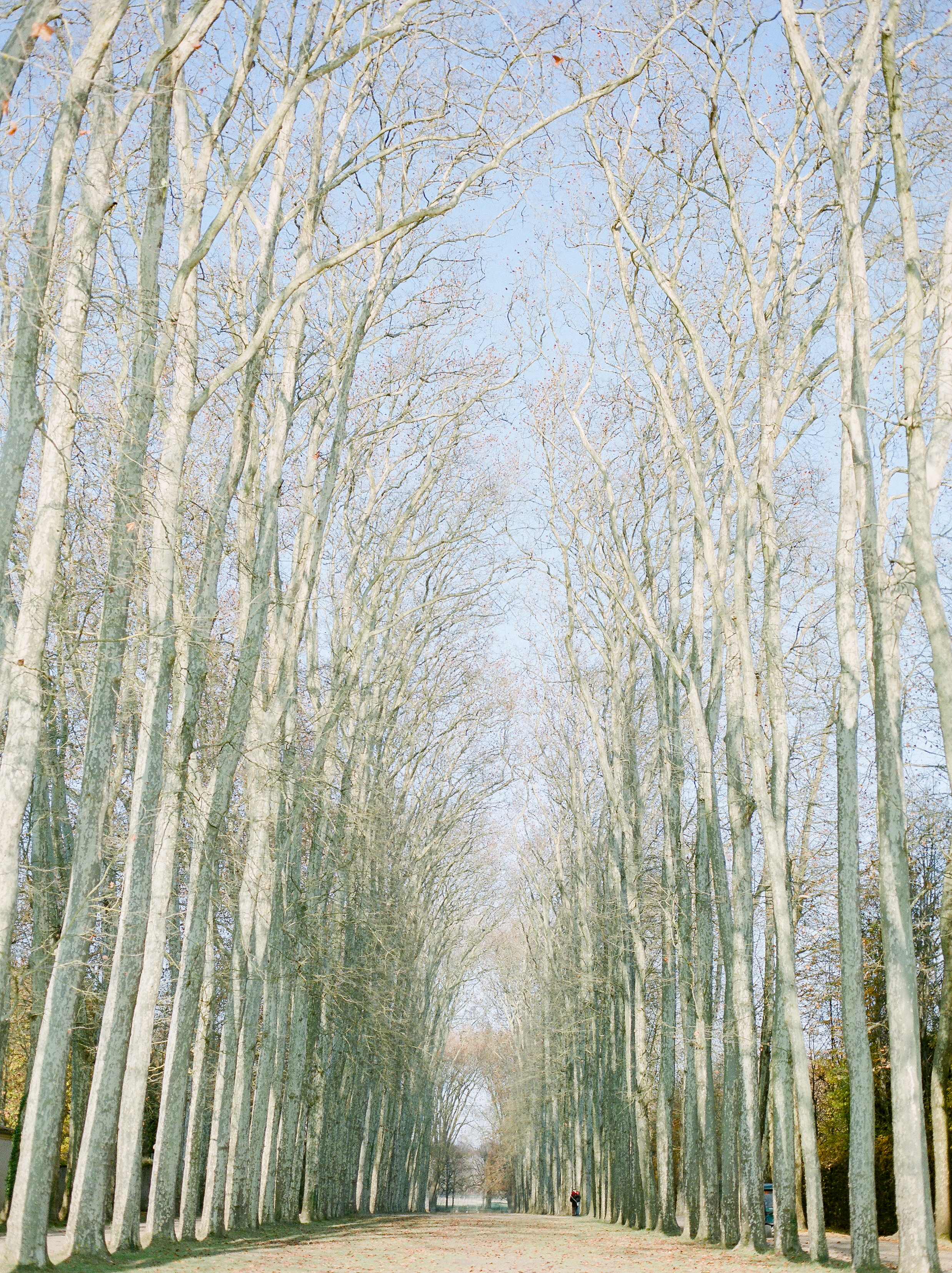 the-beautiful-grounds-in-palace-of-versailles-in-the-winter.jpg