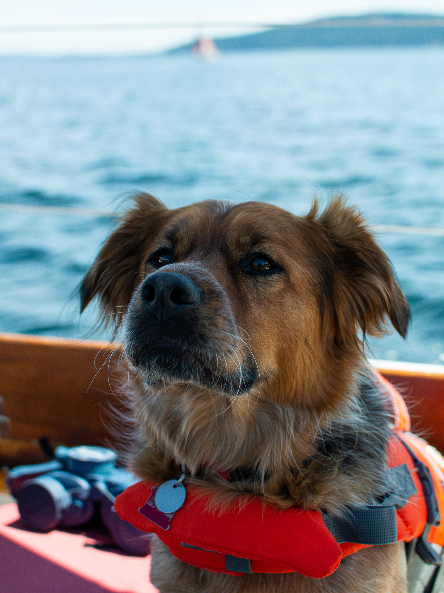 No matter how salty a dog you think you are wear that PFD