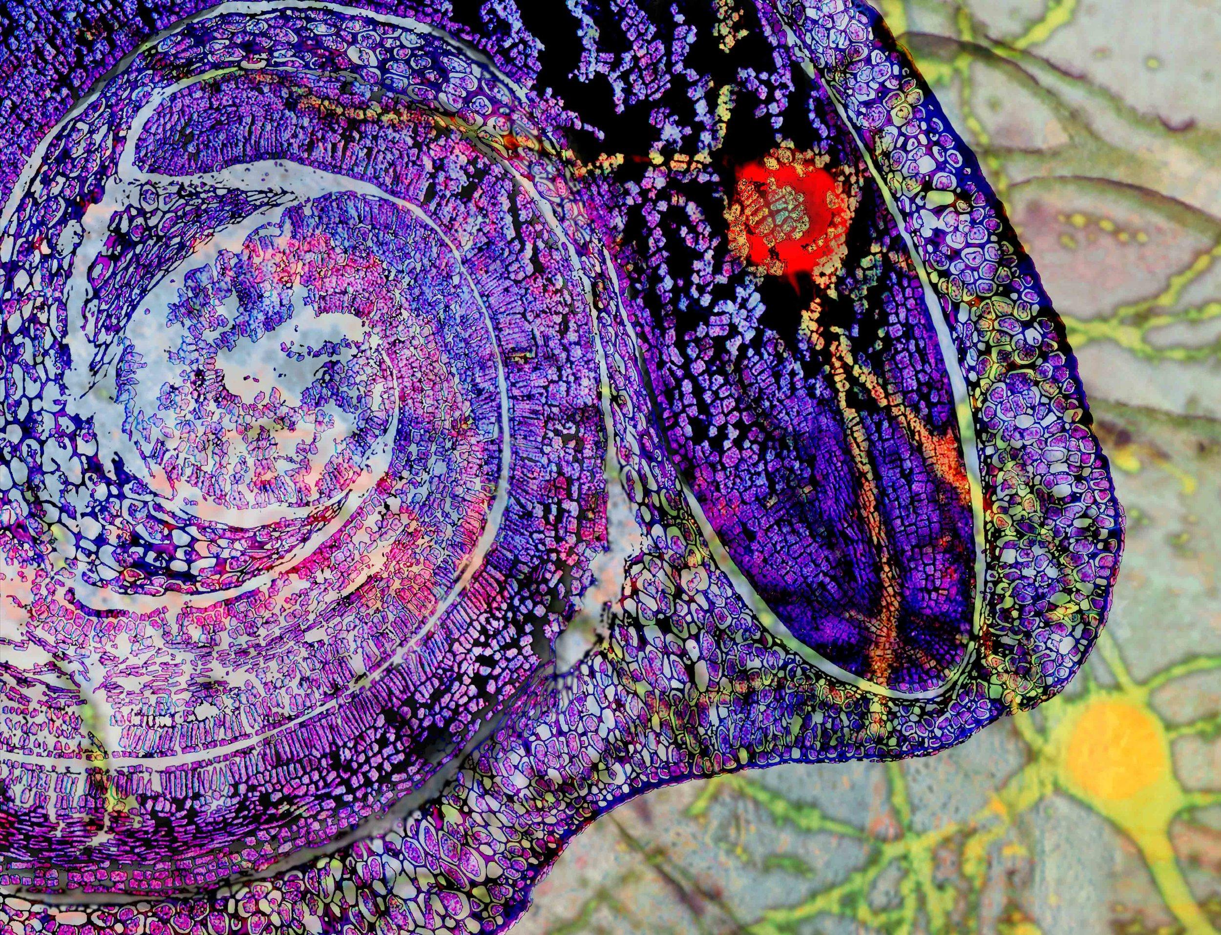 purple snake_layers.jpg