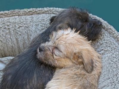 puppies.yin.yang_O6A3347.jpg