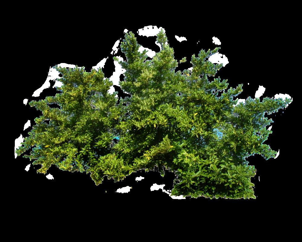 shrub1.png
