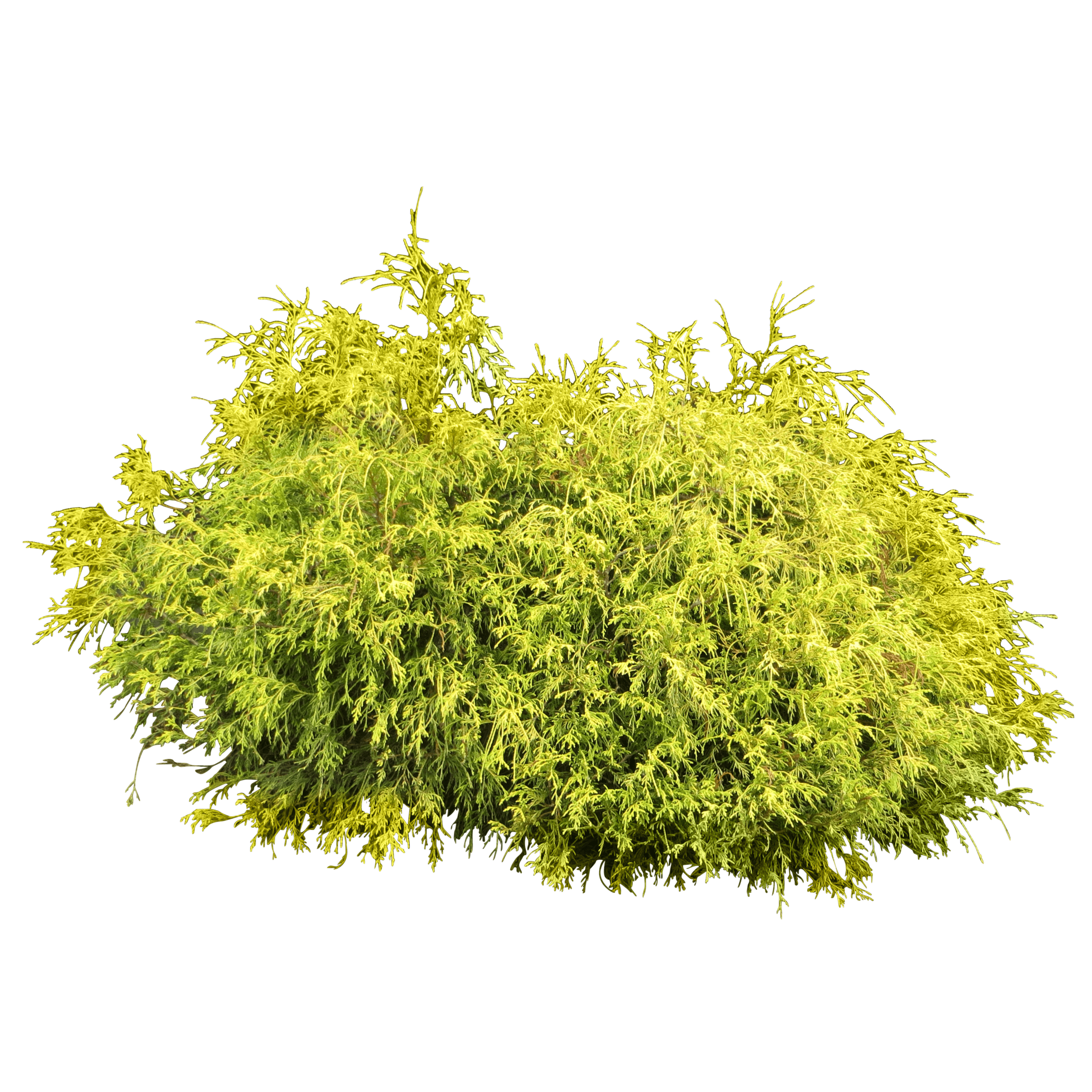 shrub2.png
