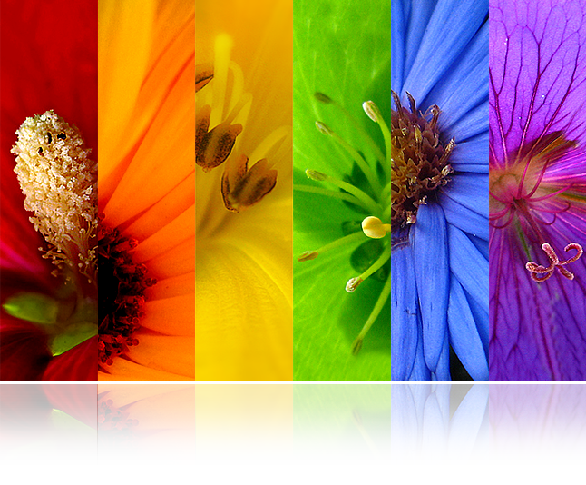 flower-tiles-graphic-646w.png