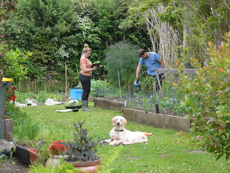My little family has recently made the big move from Melbourne to Marlborough, Aotearoa, and we're loving it. We've always dreamed about living the 'River Cottage' life – complete with thriving kitchen garden, home brewing shed, and many animals running about... now we're certainly on our way! -