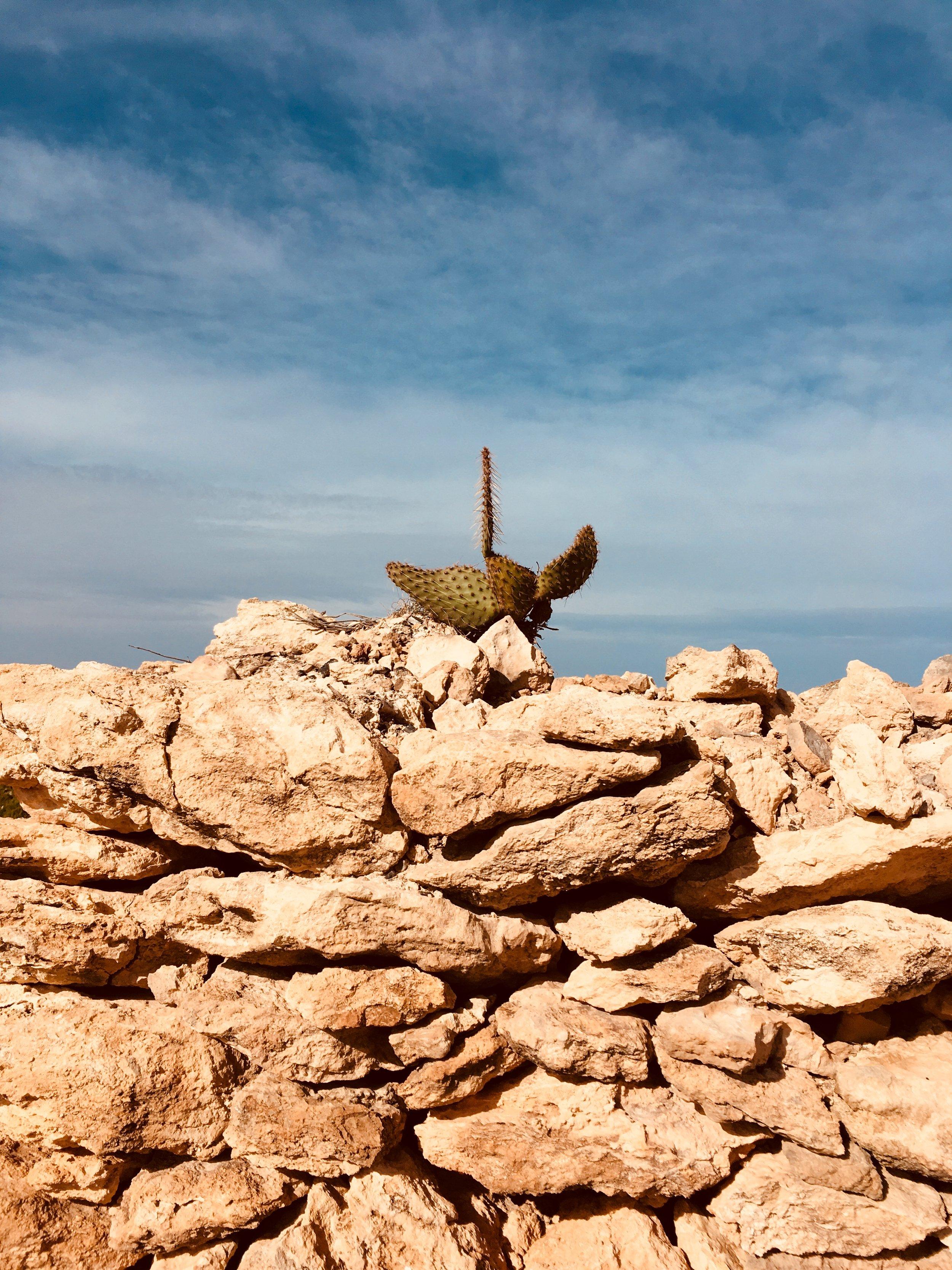 Wunderschöne Wanderung durch Ibizas Norden zum Punta de Xarracó. #wandern #ibiza #urlaub #balearen #urlaubstipps #geheimtipps