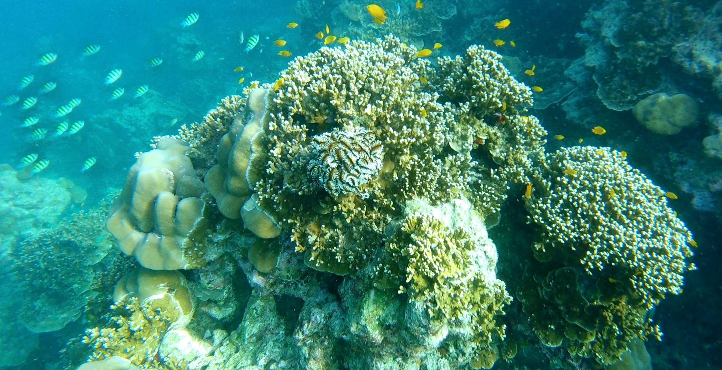 Surin Islands Adventure Snorkelling