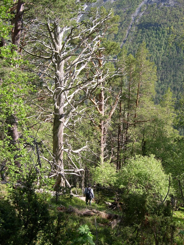 Det er i dette terenget, over 600 m.o.h., at fjellstyret tilbyr dagskort for hjortejakt.