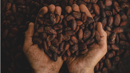 Cocoa bean hands.png
