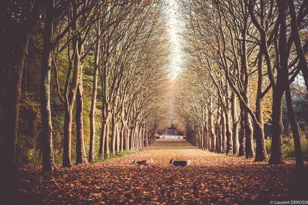 Parc de Sceaux5.jpg