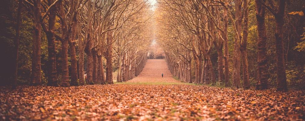 • Parc de Sceaux • -