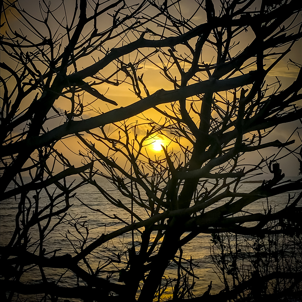 Morning wood. :-P