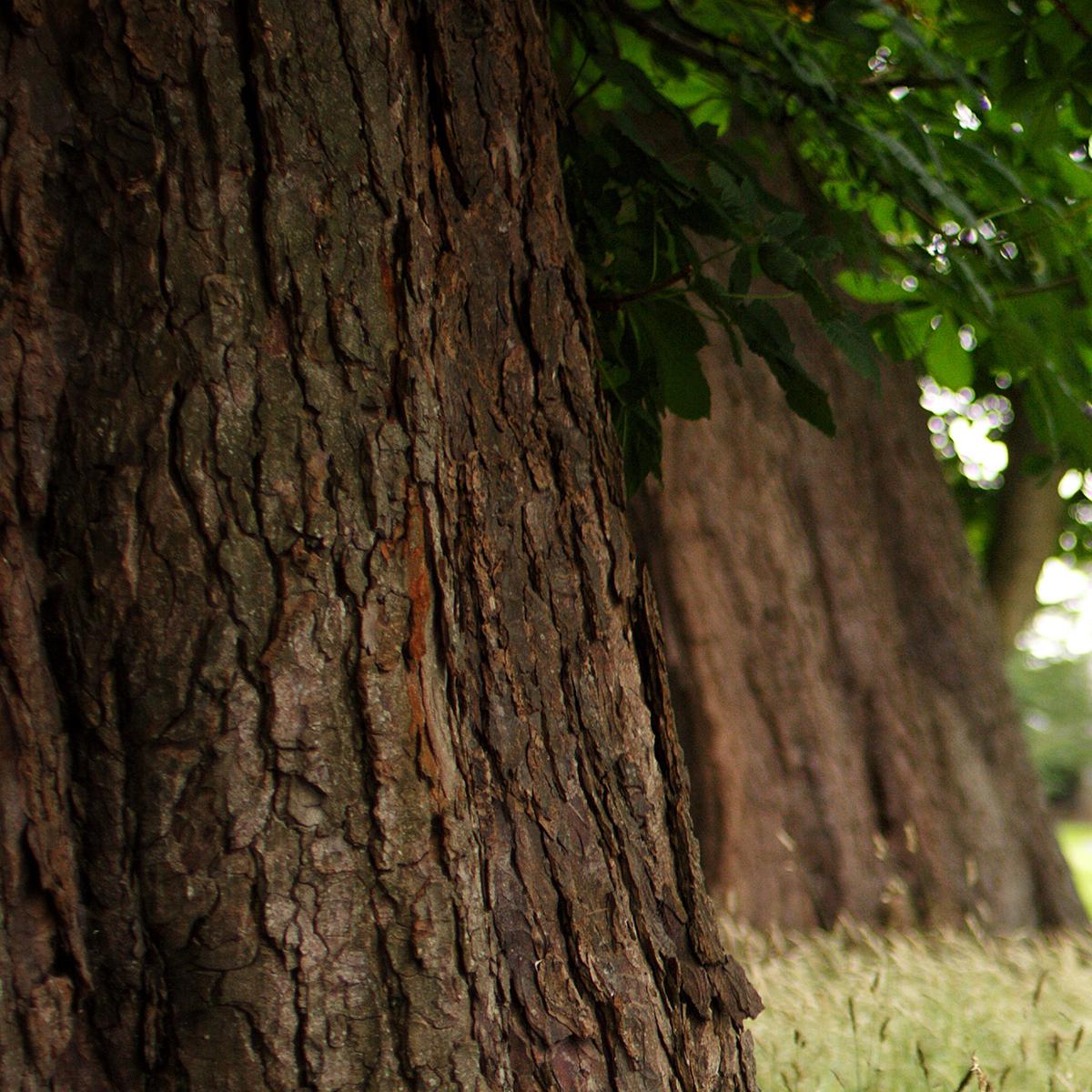 250 Acresof actively managed Woodland -