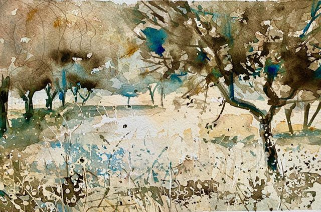 Orchard in The Luberon. Before the turning to Les Vadons there is an orchard of evergreen oak trees. The ground is a mass of grasses and dried wild flowers. At the end of the day, as the sun dips  towards the pine forest on the hill behind the house, the light catches the seed heads and transforms the orchard into something quite magical. I spent 2 evenings sitting on a scratchy bank trying to capture it all. #landscape#enpleinair#art#luberon#Les Vadons# watercolour.