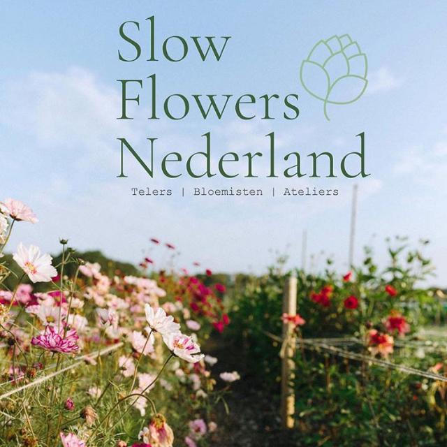 - Ik ben aangesloten bij Slow Flowers Nederland, een netwerk van bloementelers, bloemisten en ateliers die met natuurvriendelijke, lokale en seizoensbloemen werken.