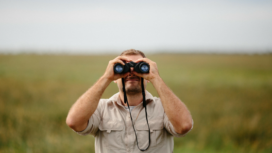 Searching Safari.png