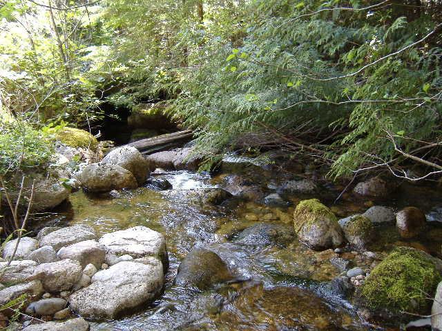 crystal creek.jpg