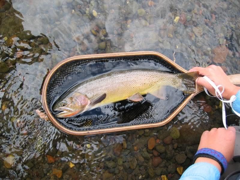 Fish in Net (Remington).jpg