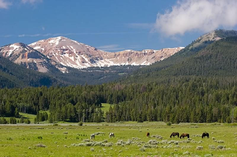 Horses grazing in the Ranch pasture, with Coffin Peak in the background.