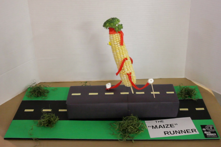 ""\""""The Maize Runner"""" by Heather Offringa""720|480|?|en|2|93598a4339b07007947091684119c786|False|UNLIKELY|0.3082880973815918