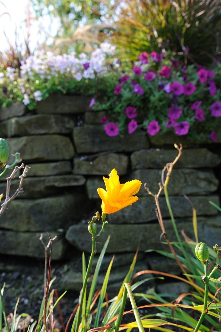spring[1].jpg