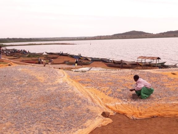 Uganda fieldwork - Lauren wrote up her first field trip to Uganda at the start of her PhD. Check out her BugBitten blog for more info on her PhD project on schistosomiasis and gut microbiome as well as what it's like to work in rural villages in Uganda.