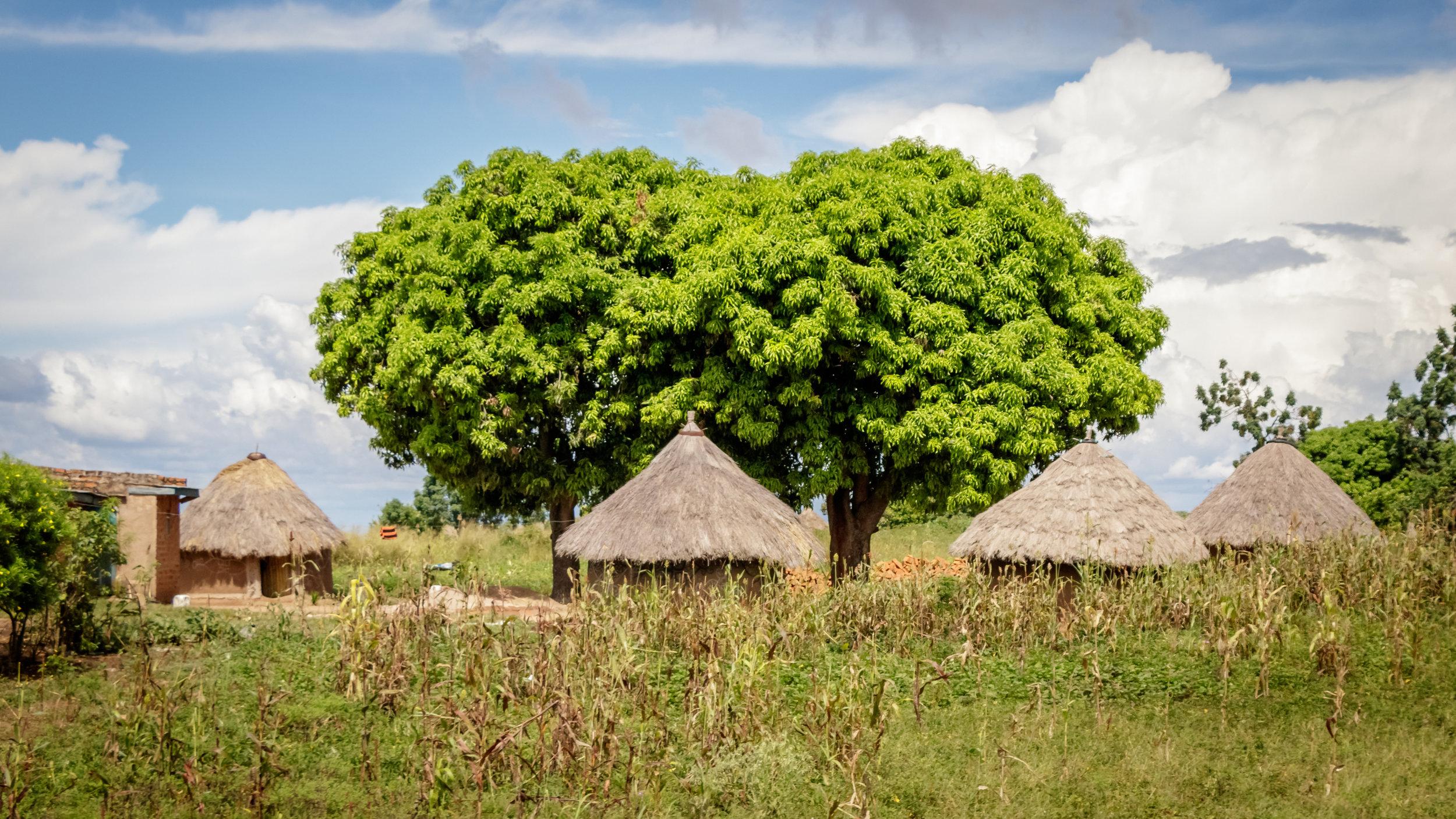 shutterstock_92229169 Uganda village 2.jpg