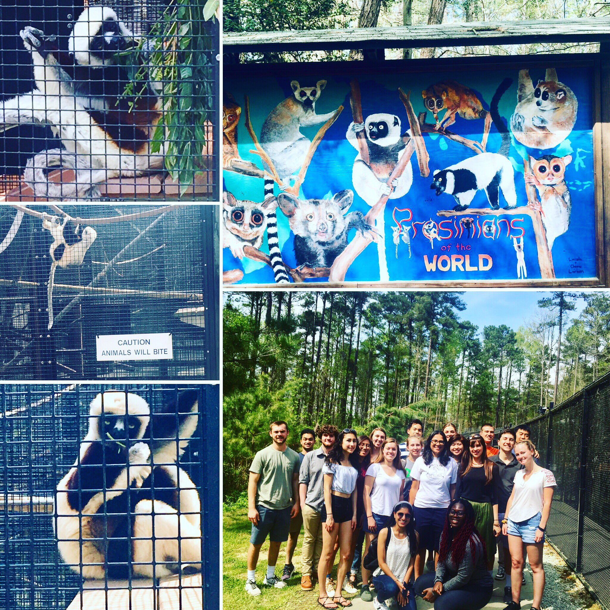 Class field trip to the Duke Lemur Center!