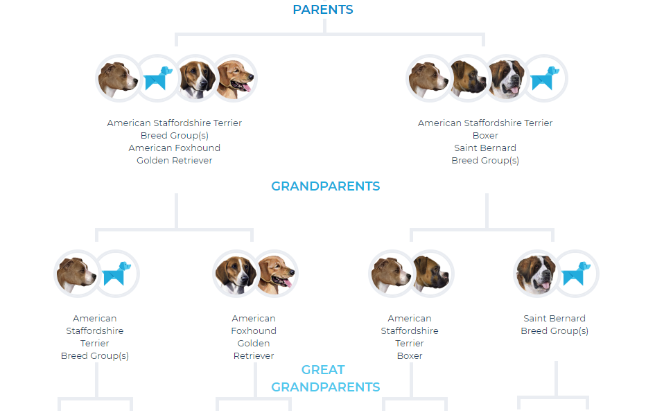 fam tree.PNG