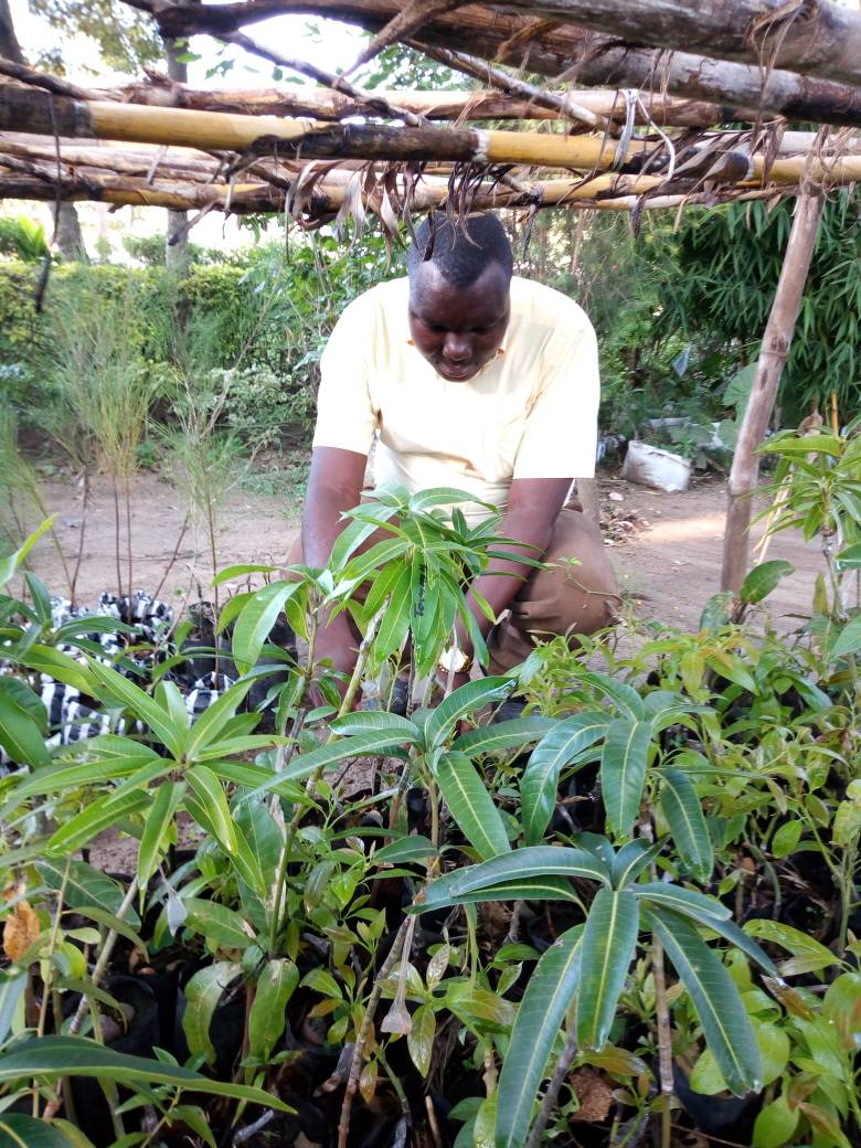 Keneth selecting seedling trees to plant in the villages