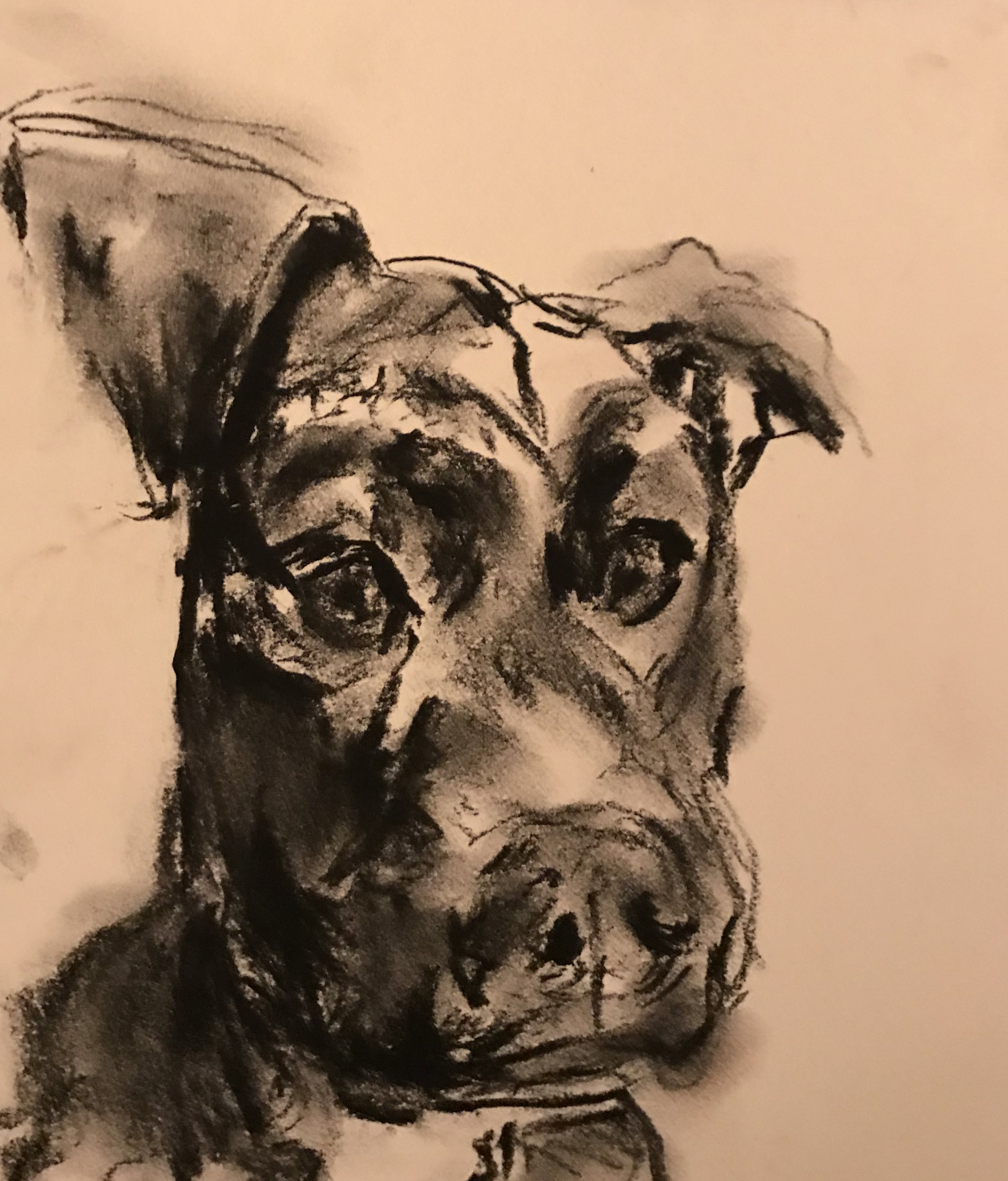 Sketch of Riley, charcoal, 9 x 9, $30