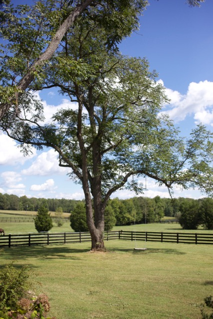 Spring Farm Vista.jpg
