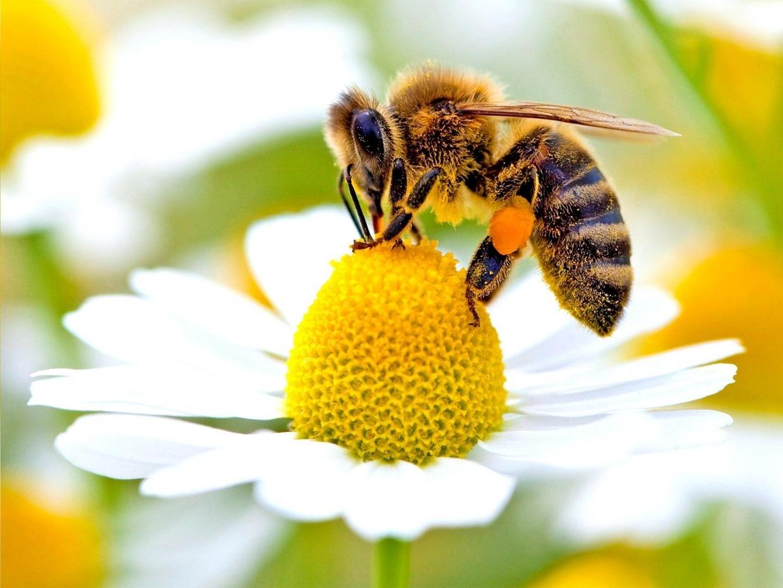 web-bees-epa.jpg
