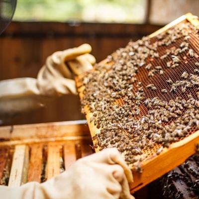 bee hive frame.jpg