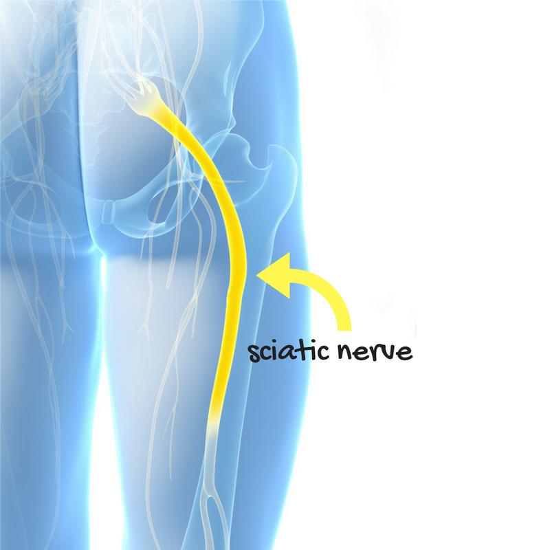 sciatic nerve (1).png