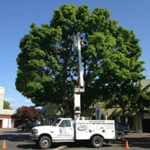Bucket truck, light maintenance, service, contracting,