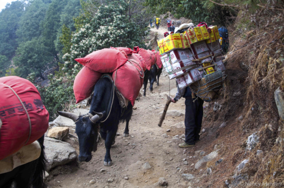 Rush hour traffic in the Khumbu. The porter (not ours) is carrying 100 kg!