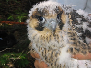 chick-close-up-small-300x225.jpg