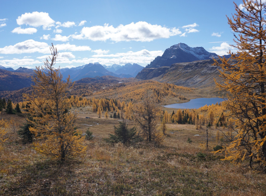 A view from Healy Pass in Banff National Park. Photo by Richard Campbell.