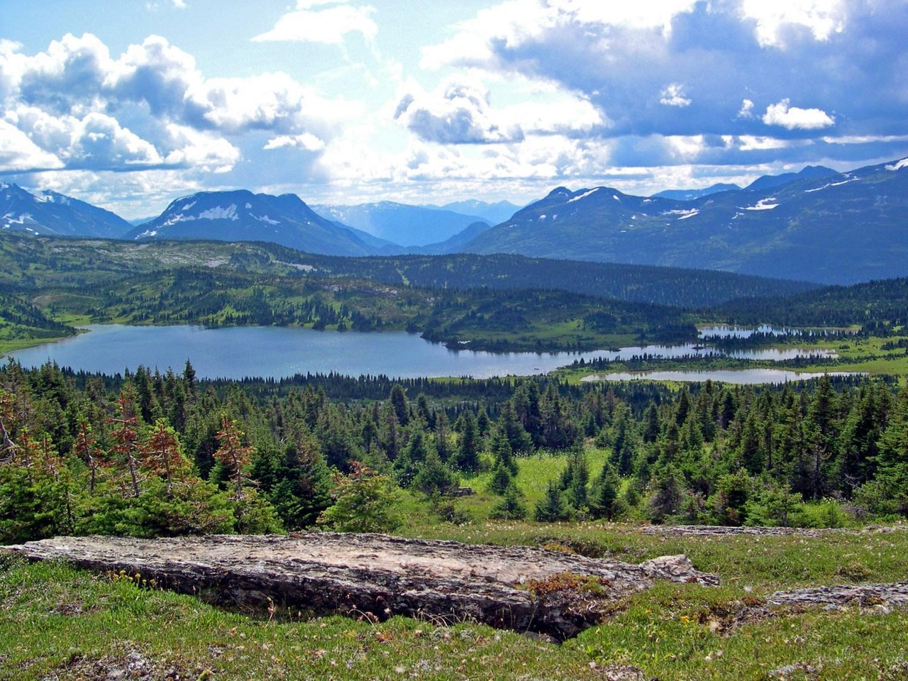 Wild Harts landscape in northern BC.