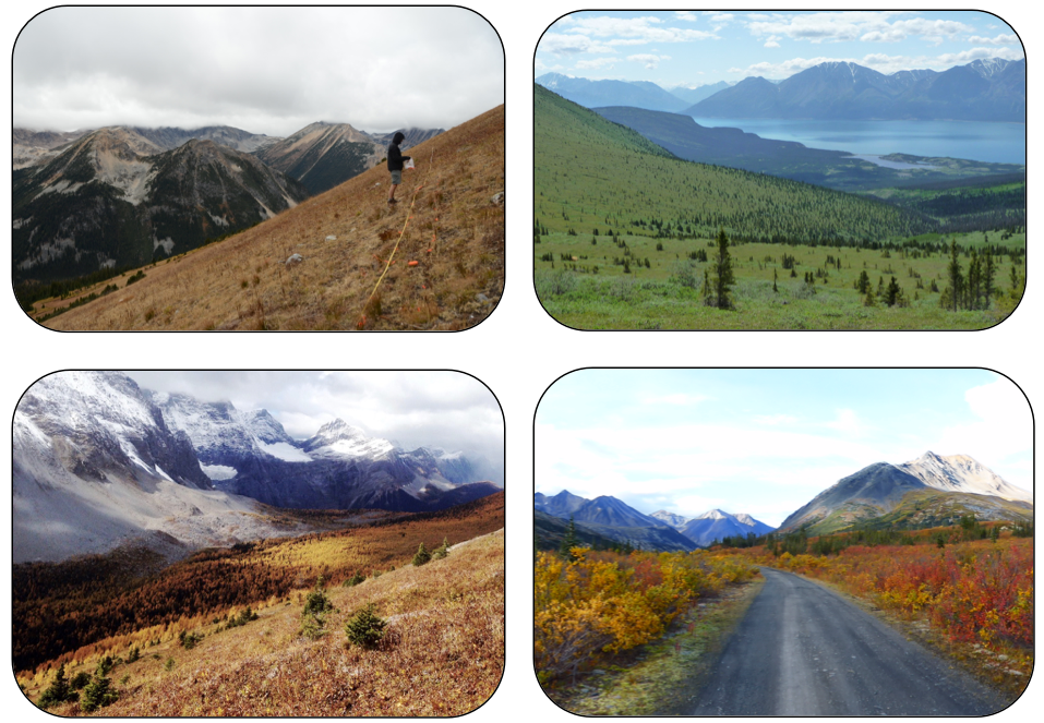 Figure 1:  Diverse treelines across western and central Canada. (a) Coast Mountains of BC (photo credit: Andrew Trant), (b) Printer's Pass Valley, Ruby Range, Kluane National Park, YT (Katherine Dearborn), (c) Goodsir Pass, Kootenay National Park, AB (Emma Davis), and (d) Mackenzie Mountains, NT (Steven Mamet).