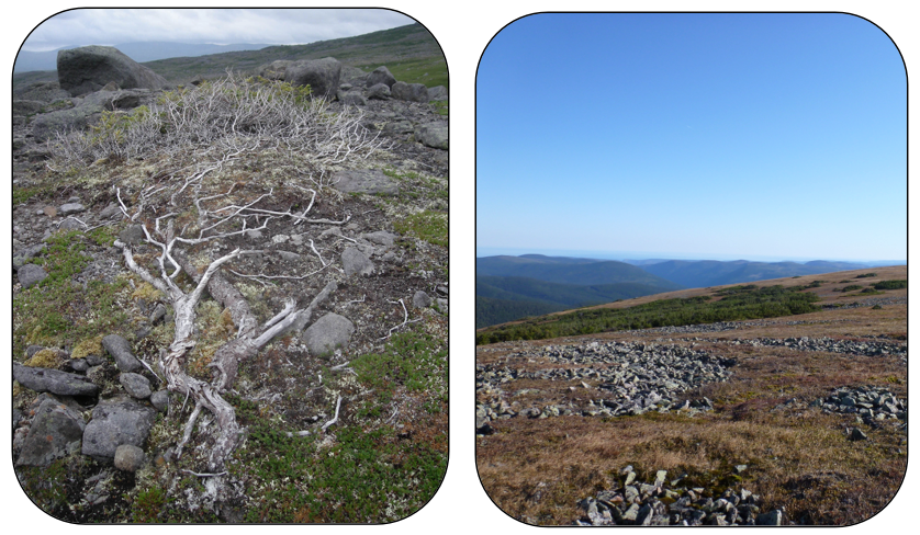 Figure 4:  Treeline expansion can be slowed down by (a) harsh conditions in the winter that can damage individuals via snow scouring, killing emerging branches (Mealy Mountains, NL; photo credit: Brian Starzomski) and (b) geology and geomorphology, when there simply may not be any soil substrate present for trees to expand onto (Chic Choc Mountains, QC; Sébastien Renard).