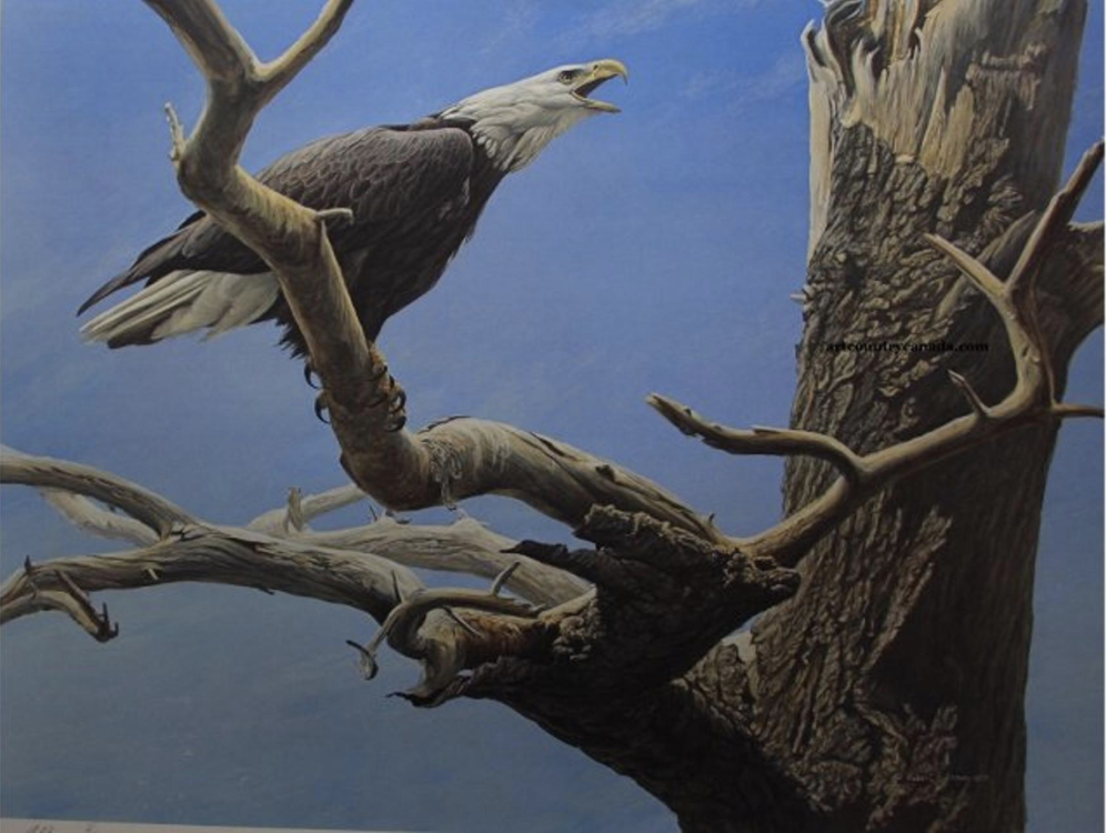 """""""Call of the Wild"""" Signed Artist Proof. 20"""" x 27"""" by Robert Bateman. Retail $770. Bidding starts at $385."""
