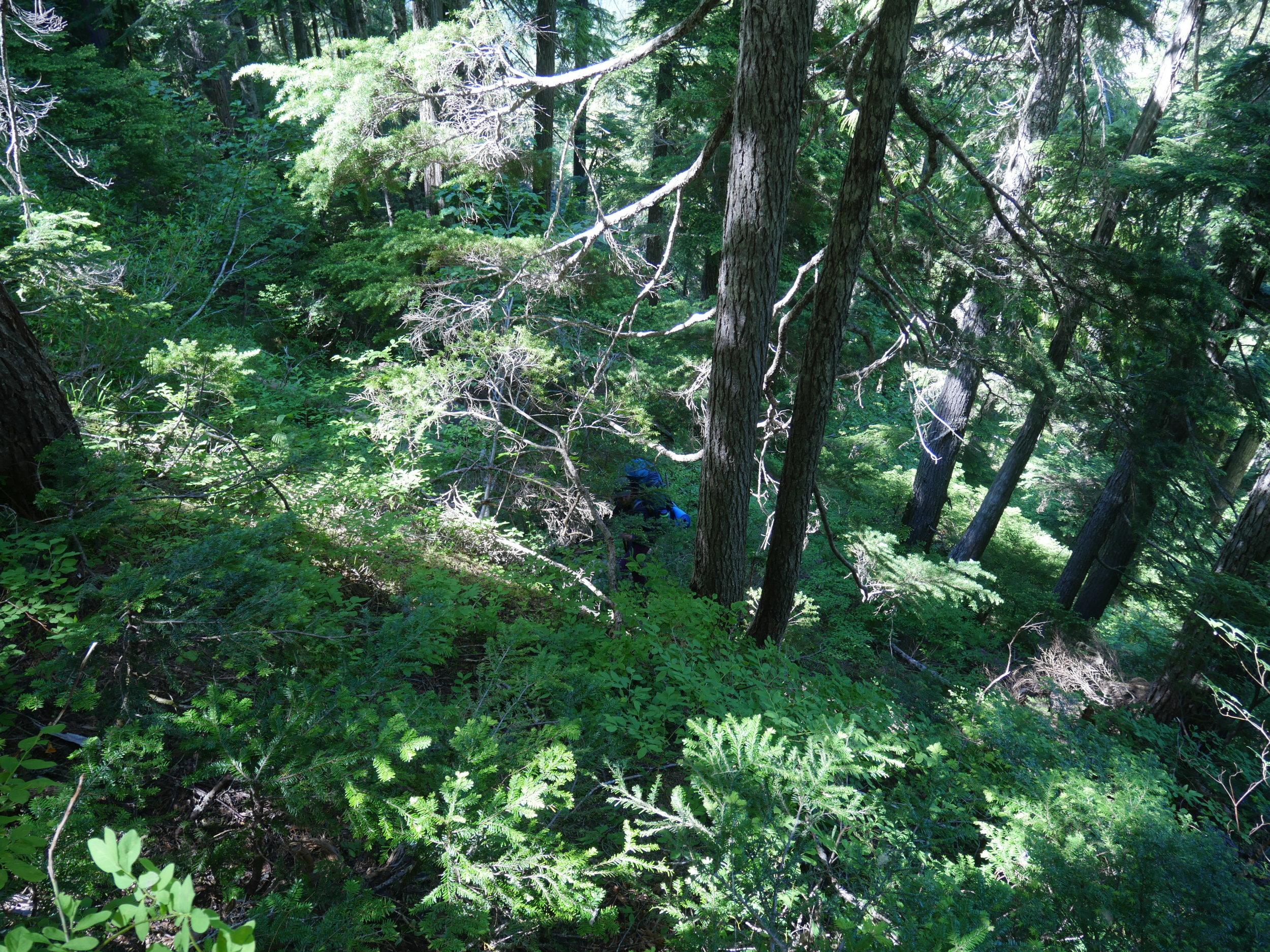 Descending a bushy slope off of Jutland Ridge. Photo: Ken Wong