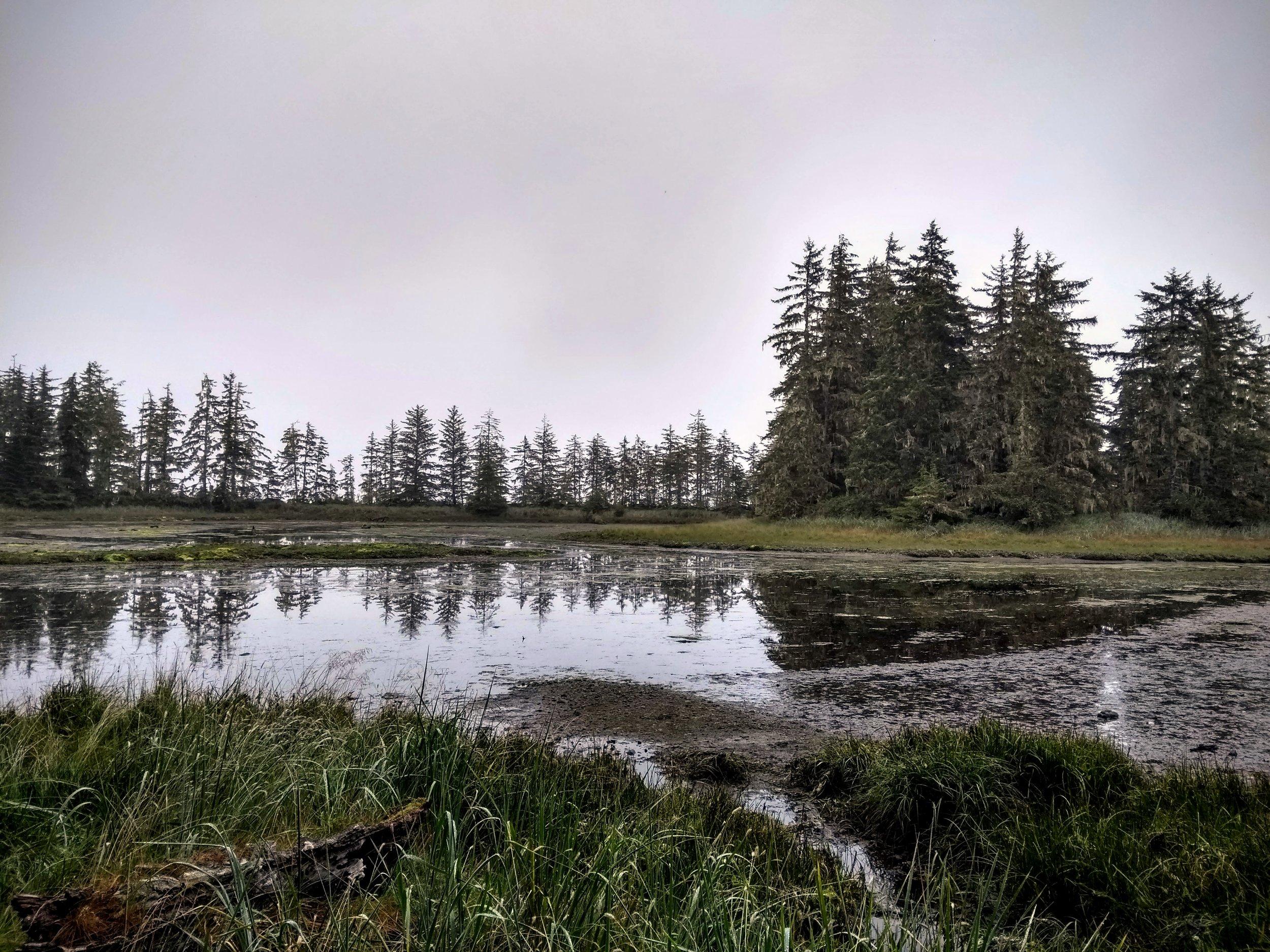 Salt Marsh in the Cluxewe River Estuary