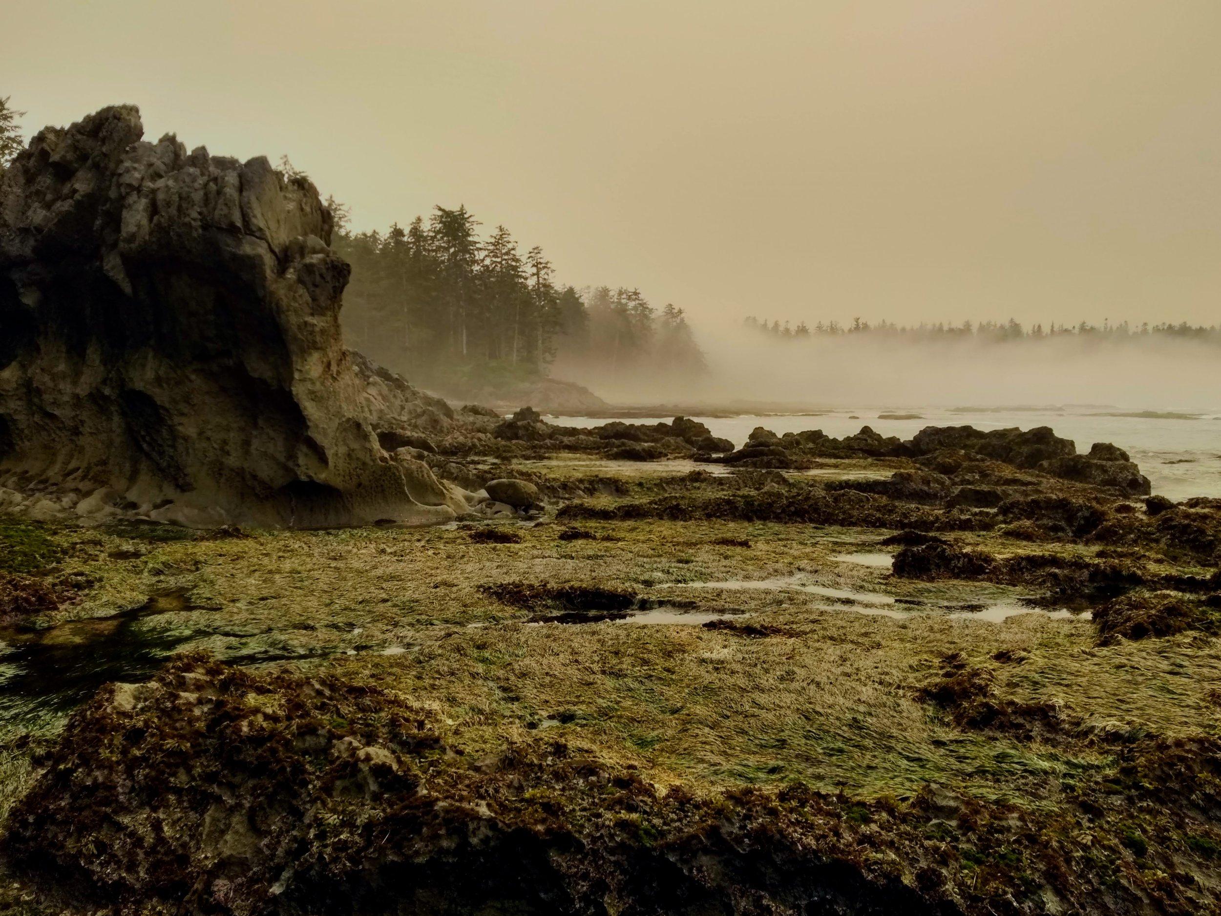 A foggy day on the North Coast Trail