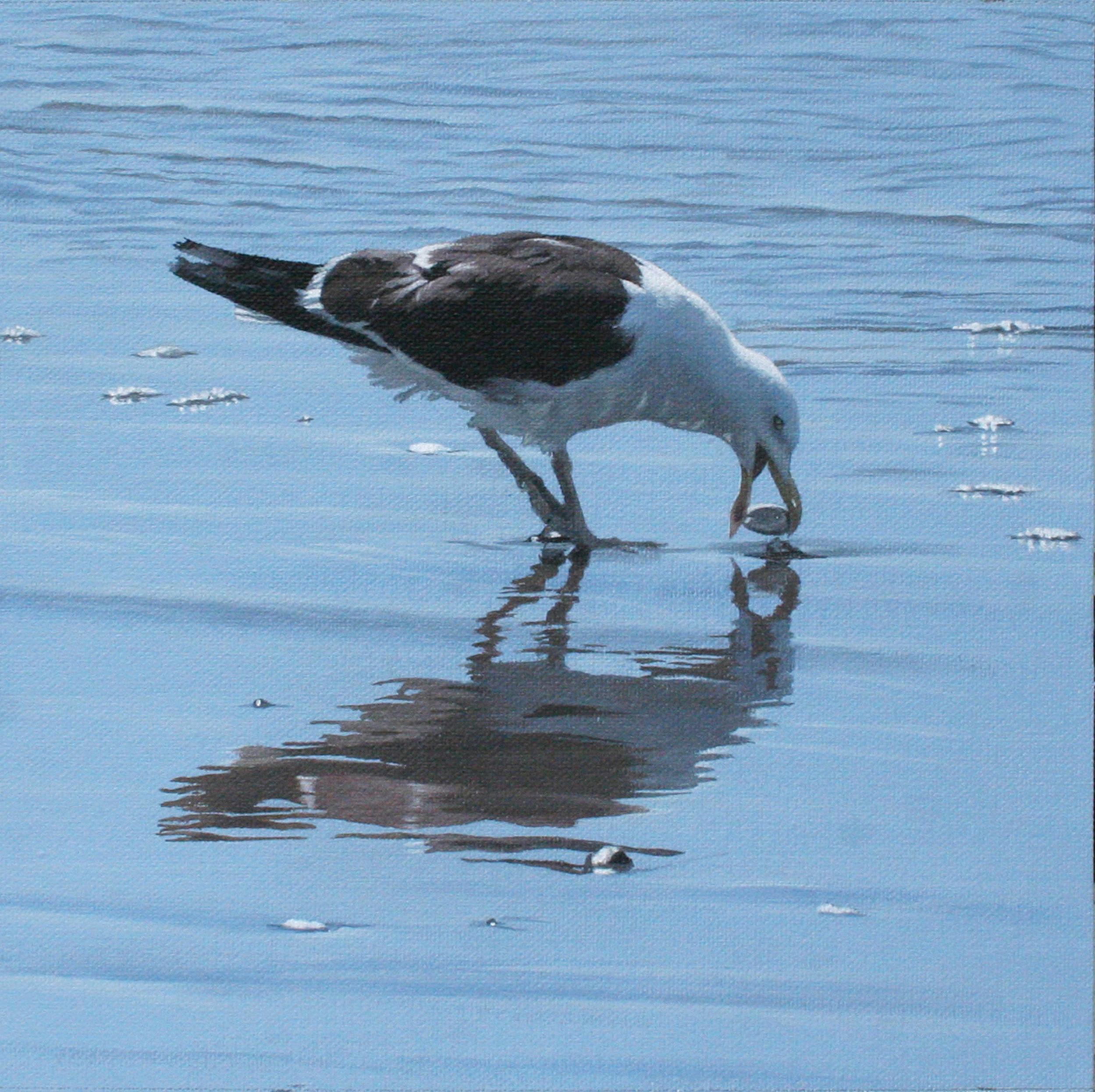 Seagull Heaven – Ohope 1